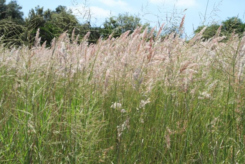 The importance of grasses